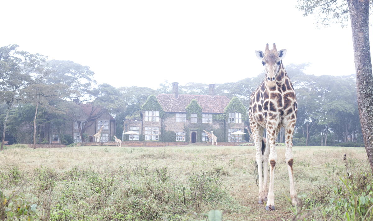 The Manor surrounded by resident giraffes.jpg