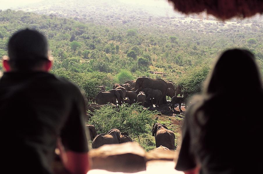 elephant-hide.jpg