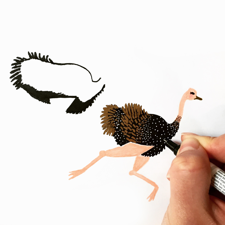 Peacock Drawing_REV.jpg