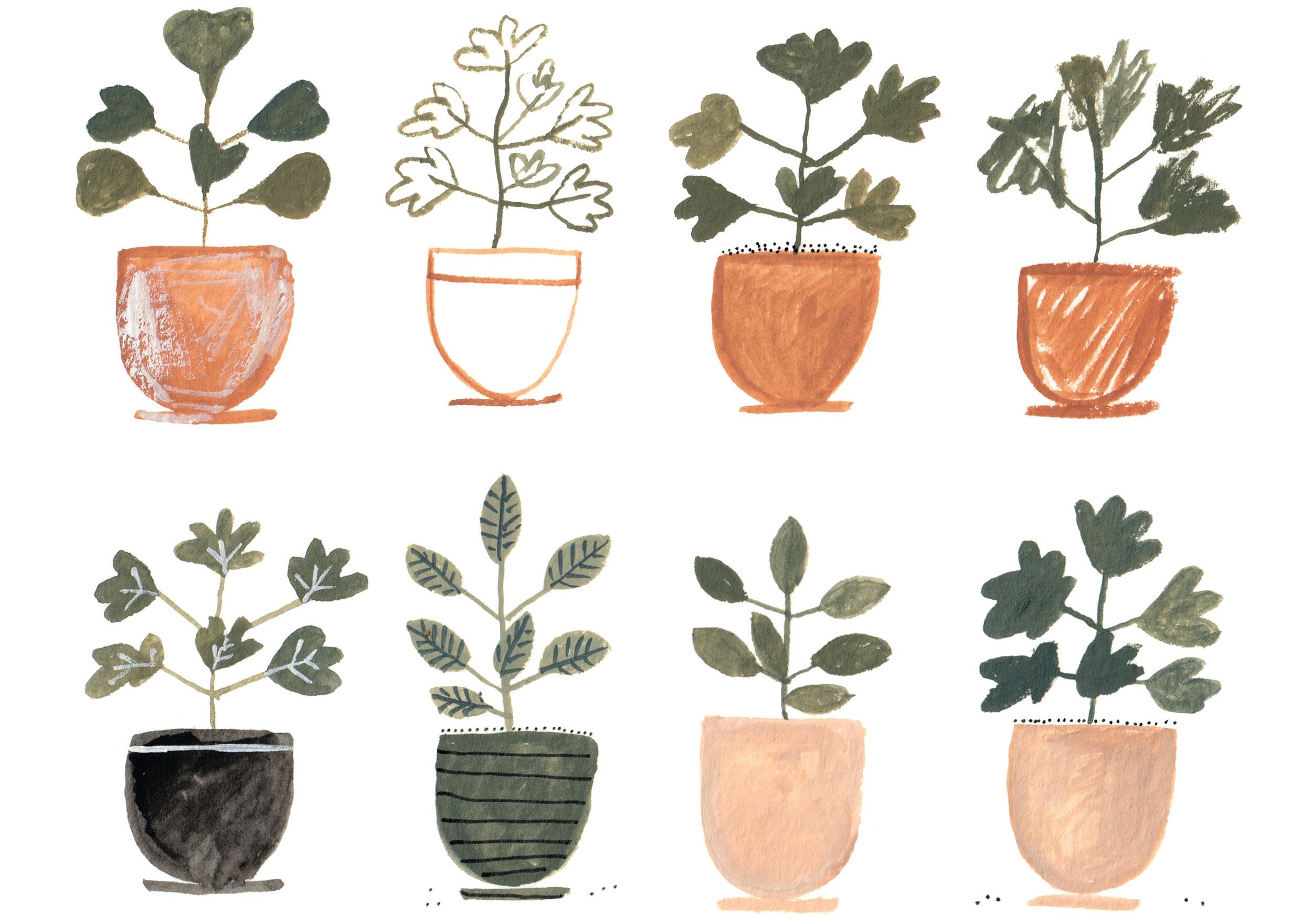 Plant Study.jpg