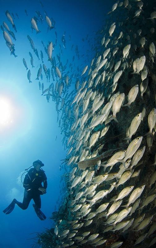 buzo con peces JPZegarra-PR.jpg