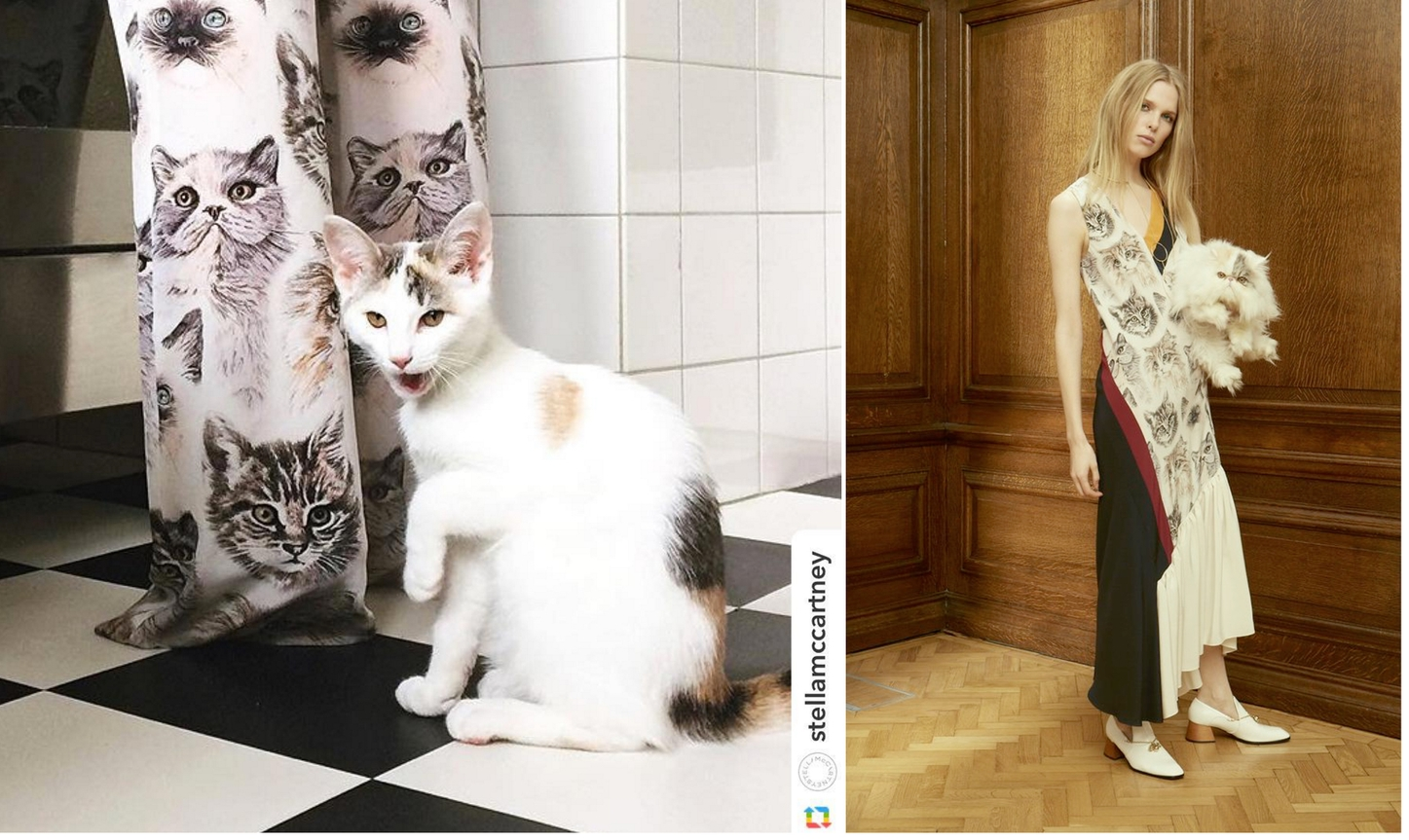 Stella McCatney doing a spot of meowdeling and silk Stella McCartney dress (Pre-fall 2016)