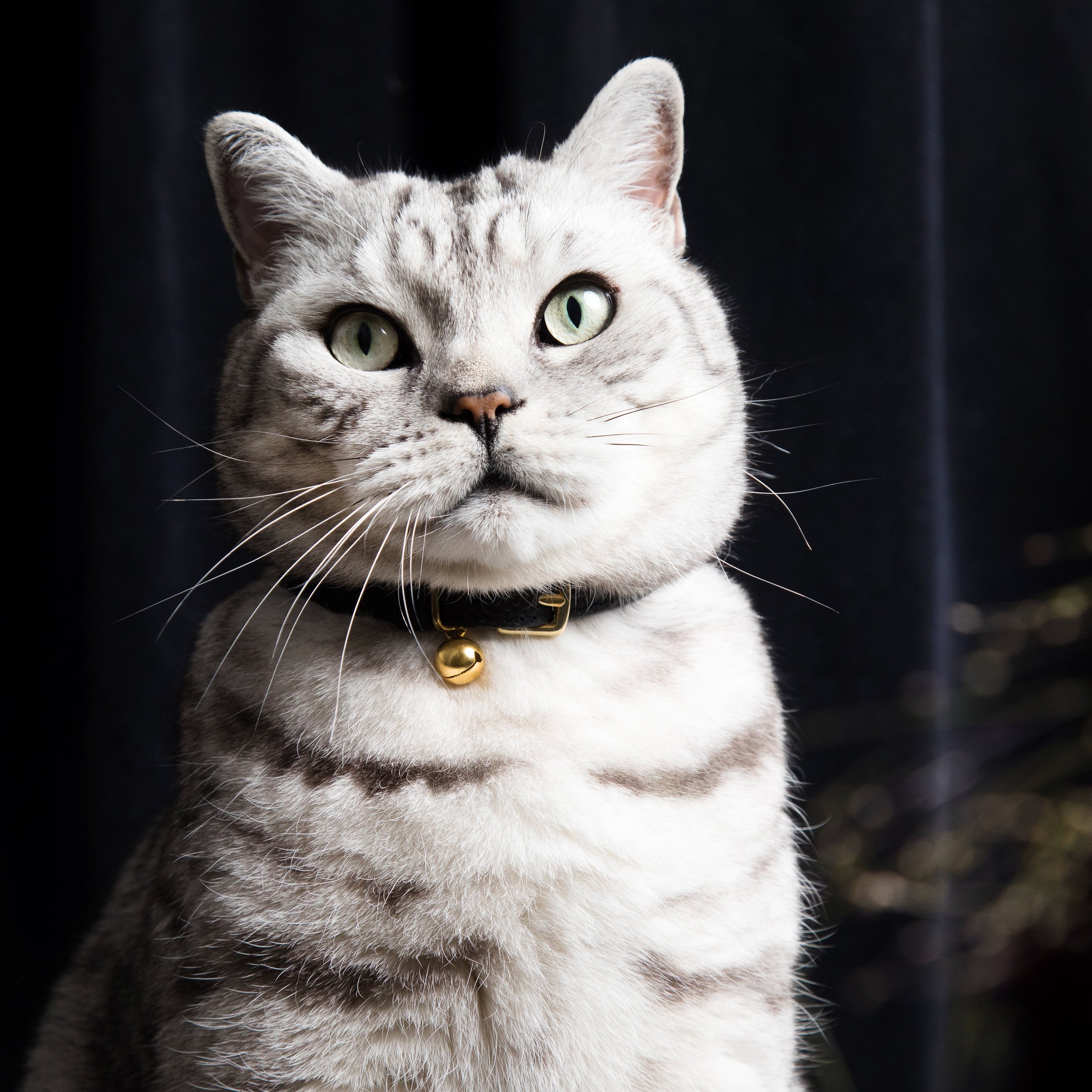 leather safety collars cat collar luxury designer