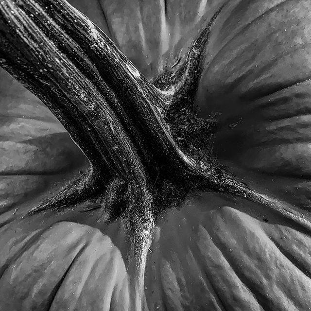 The Porch Pumpkin 2019 #fall #October #great stem #orange is cliche #Iphoneandme #michaelbarleyphoto #b&w