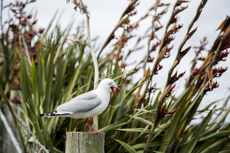 Albatross1.JPG