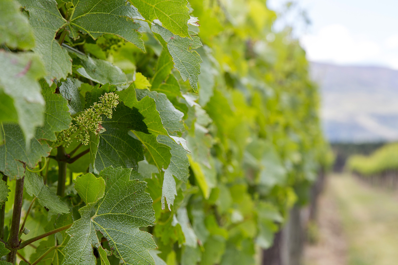 Otago_Wine_11.JPG