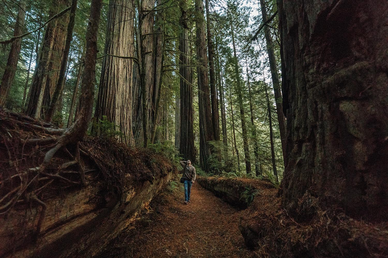 Redwoods 8.jpg