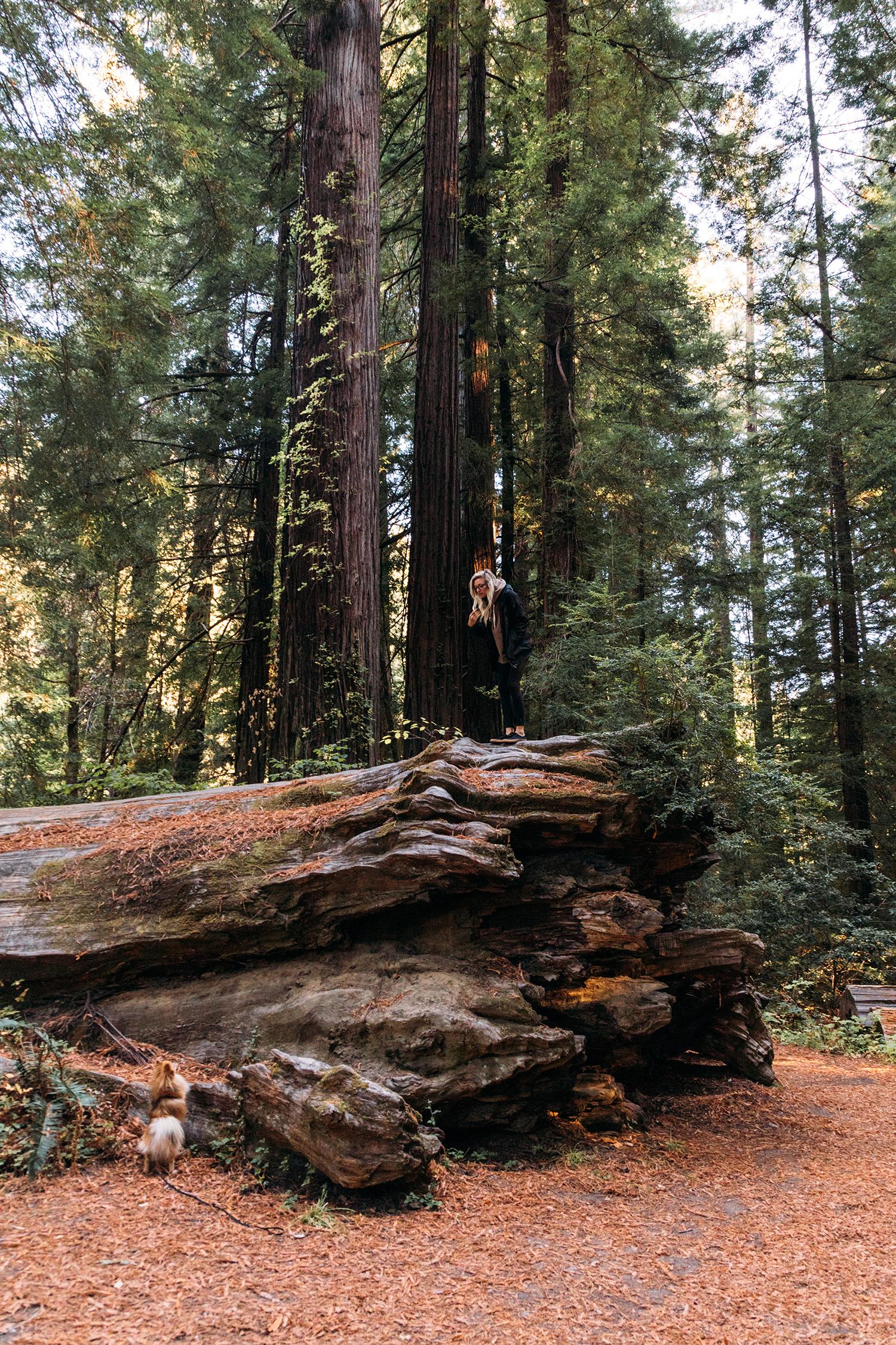 Redwoods 10.jpg