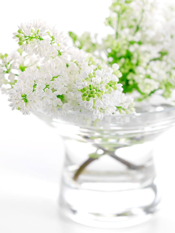 White Lilac #2