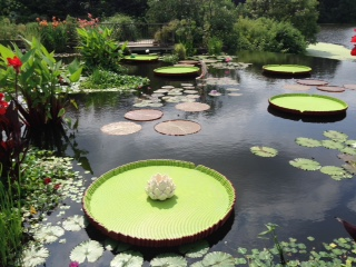 Lilly pads (real and lego) at Powell Gardens.