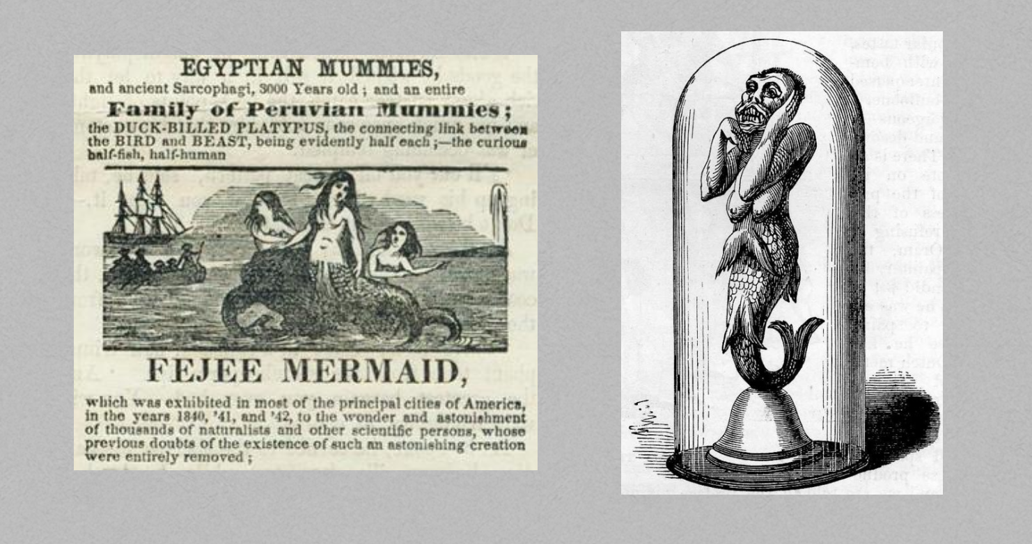 """Images 1 and 2: An advertisement for (left) and photograph of (right) Barnum's exhibition of the """"Feejee Mermaid."""""""