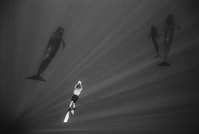 Swimming with Pilot Whales (W 21),  2005/14, archival pigment print, 11 x 17 inches