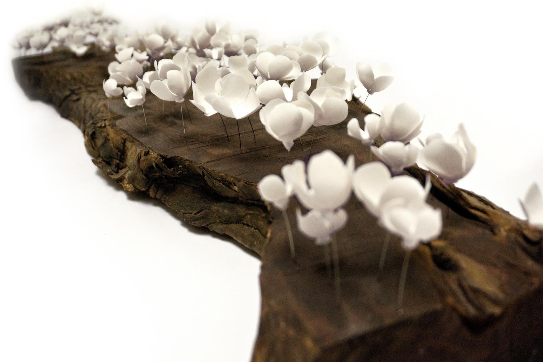 Bloom Log   (Detail)