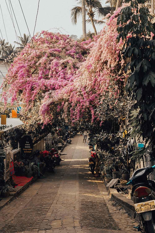 LUANG-PRABANG-LAOS-FOR-WILD-ROGUE-WEB-18.jpg