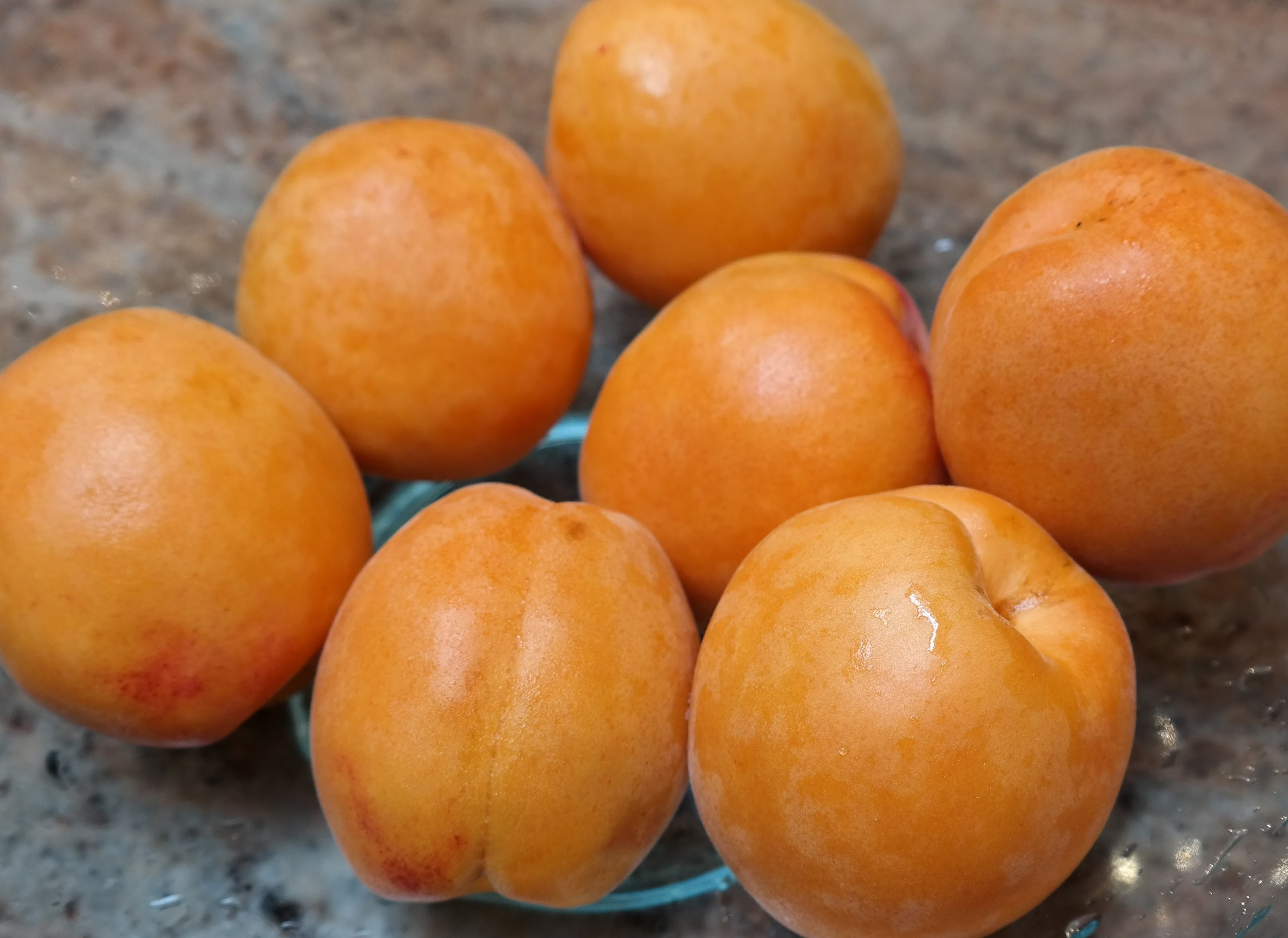 Maryhill apricots we found at NW grocers yesterday morning.