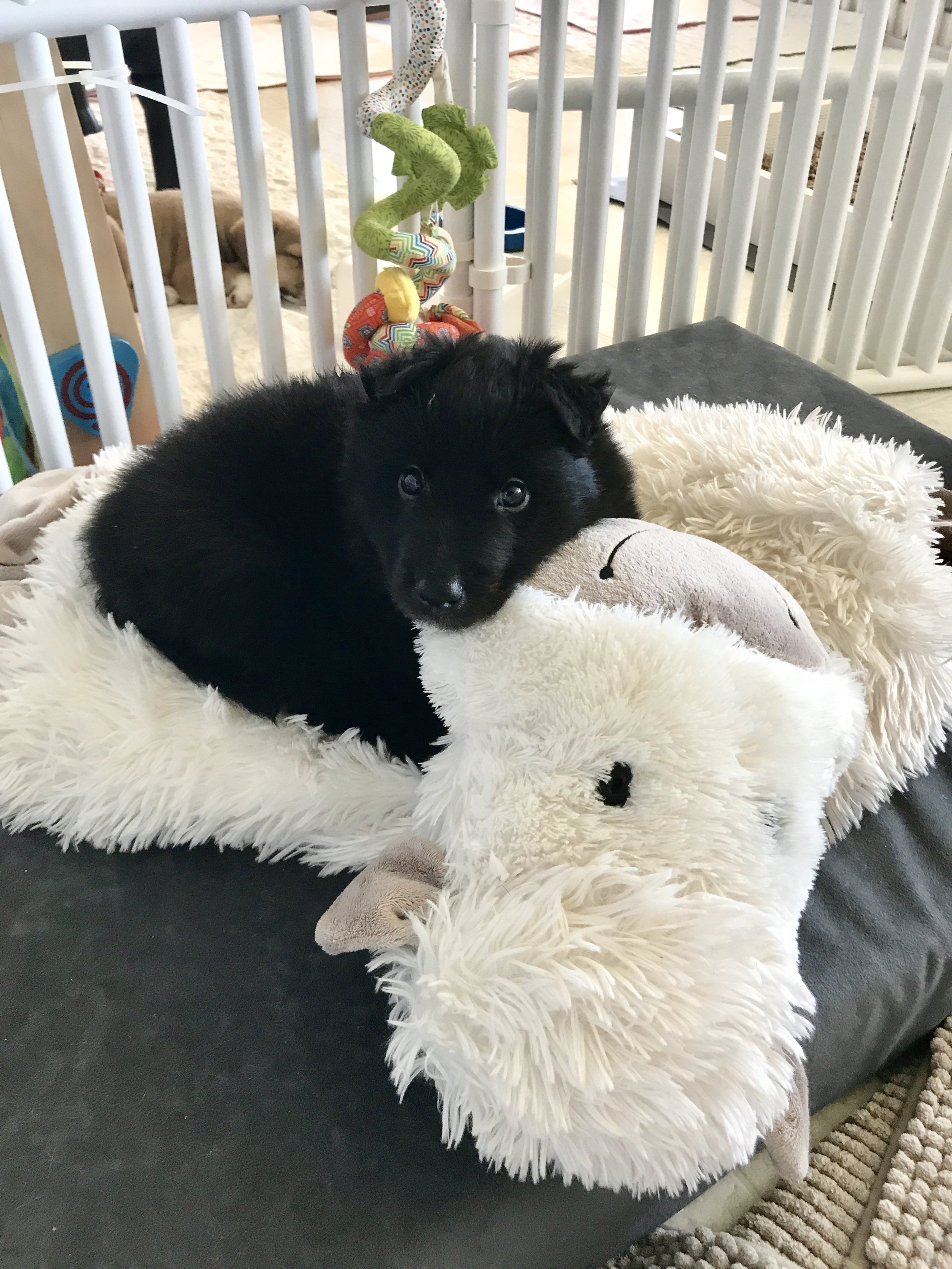 Baby Mia loves her lamb