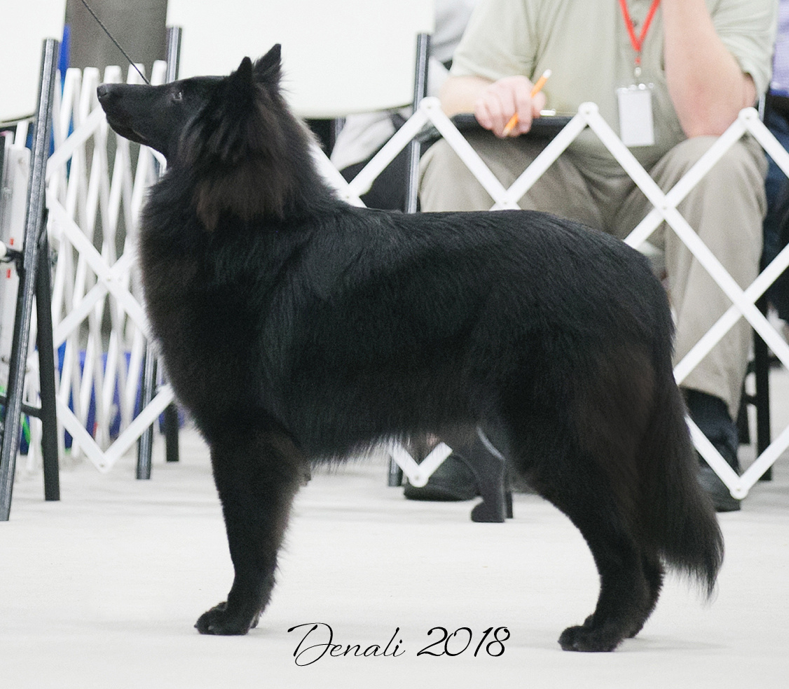 BSCA 2018 Denali (2).png.jpg