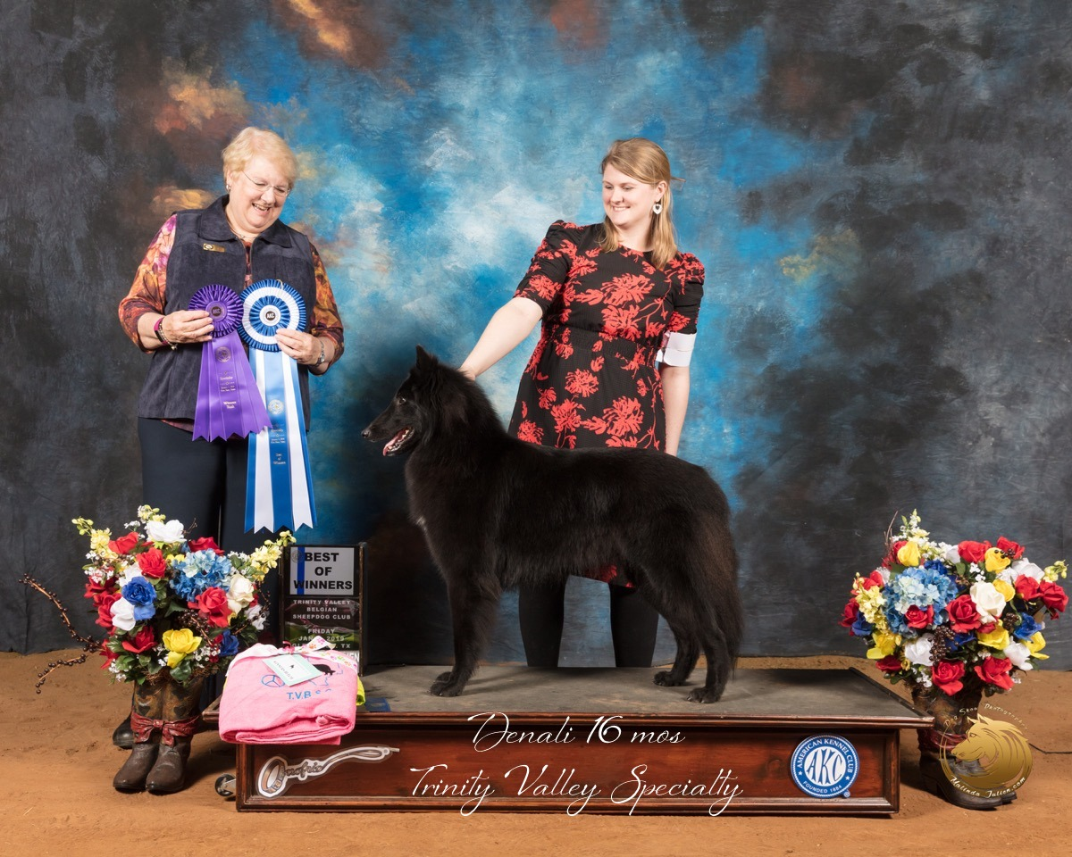 Belgian_Sheepdog_#6_Fri_BOW_WB_Judge_Sharon_Ann_Redmer_SSR_8595-GlnRse19-HR3-(ZF-8407-02034-1-002).JPG