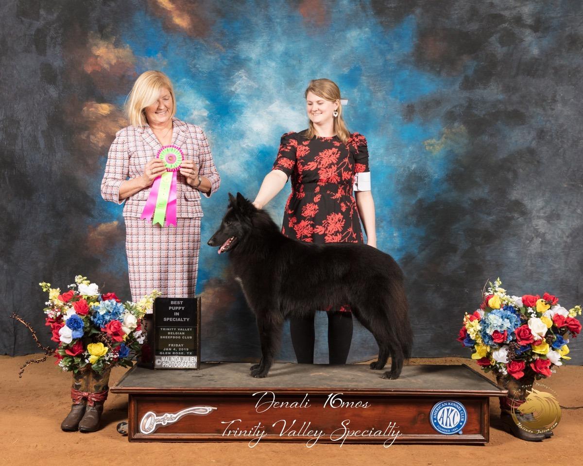 Belgian_Sheepdog_#6_Fri_Best_Puppy_in_Sweeps_Judge_Christine_Klockenbrink_SSR_8605-GlnRse19-HR3-(ZF-8407-02034-1-001).JPG