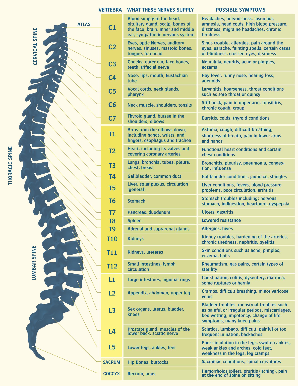 nerve-chart.png