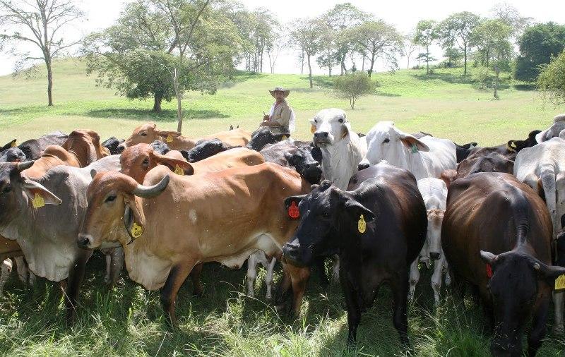 Los ganaderos exigen más oportunidades para producir Foto: Archivo
