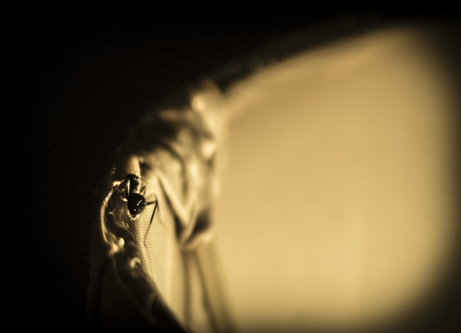 The Ant.JPG