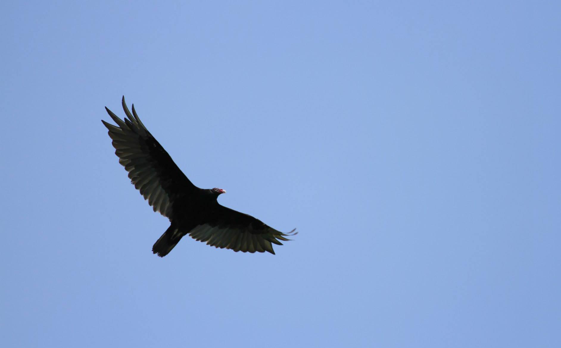 The Bird of Prey.jpg