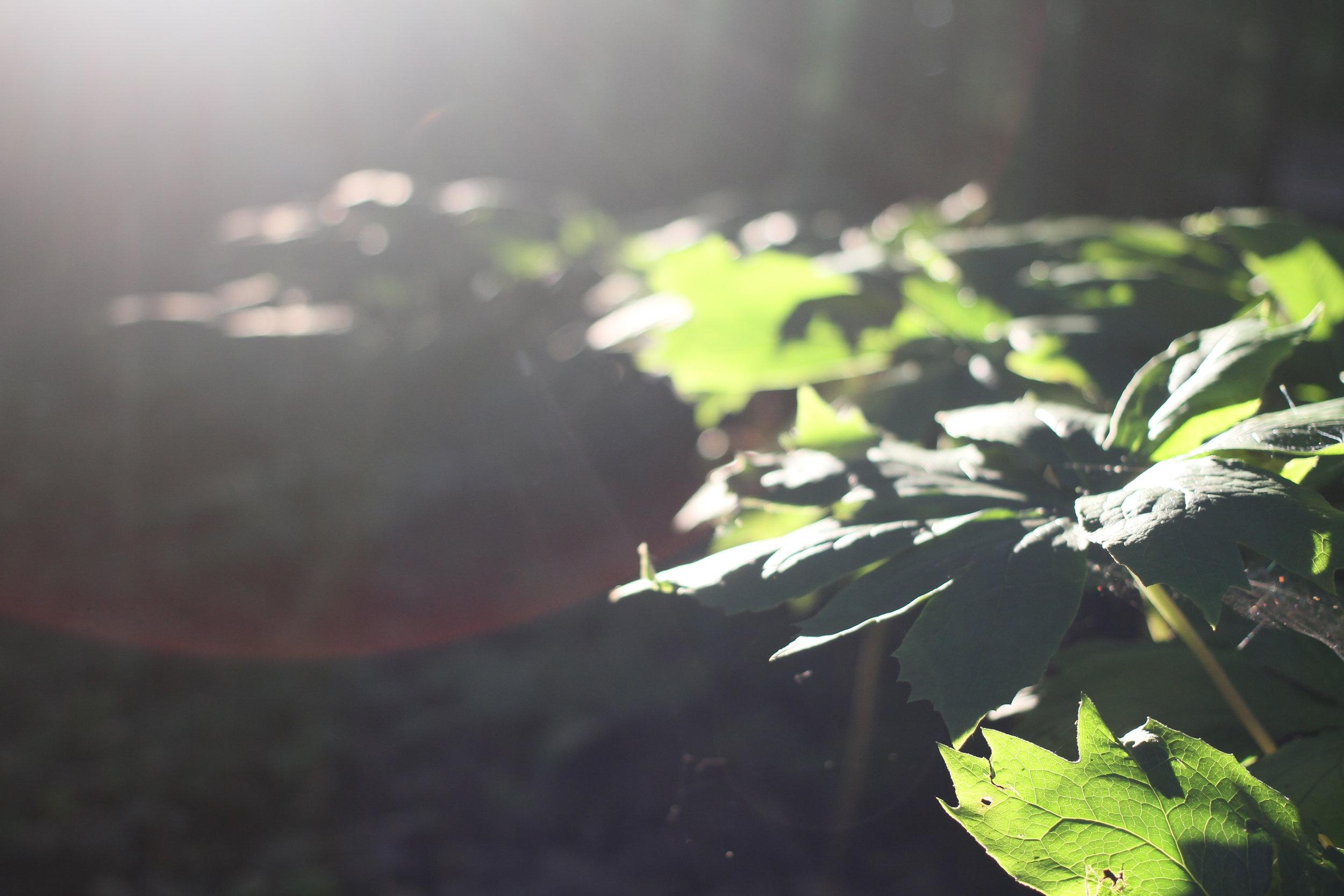 The Foliage.JPG