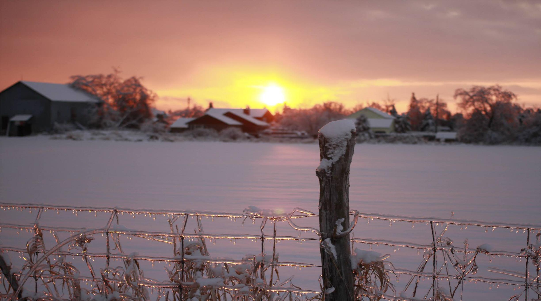 The Ice Storm.jpg