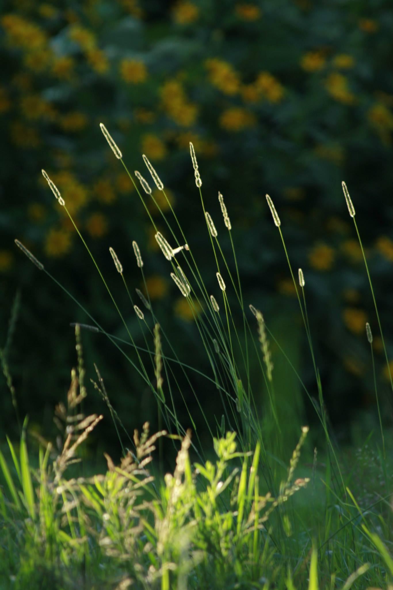The Reeds.jpg