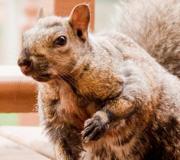 The Squirrel.jpg