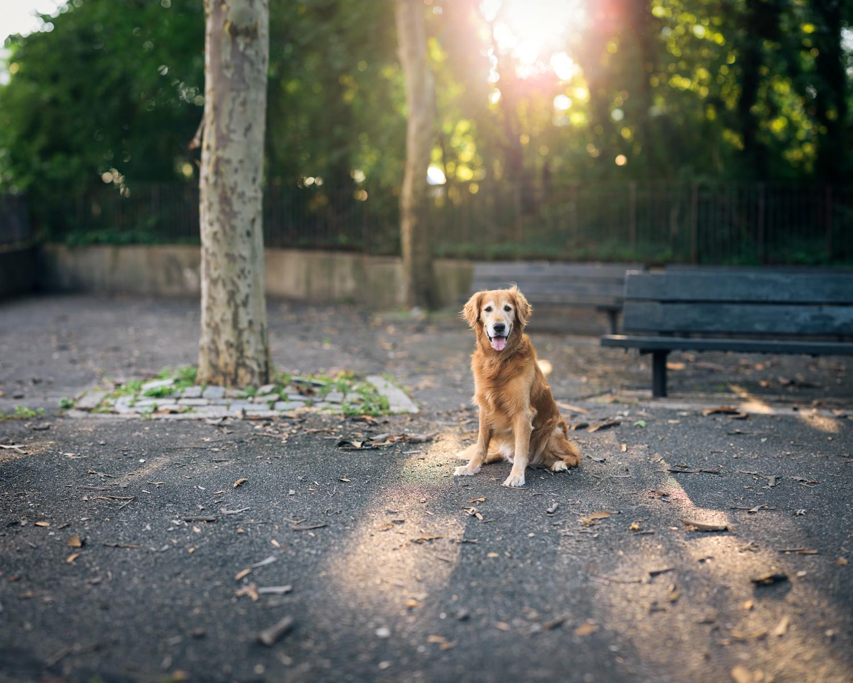 Dog Panoramic Portrait
