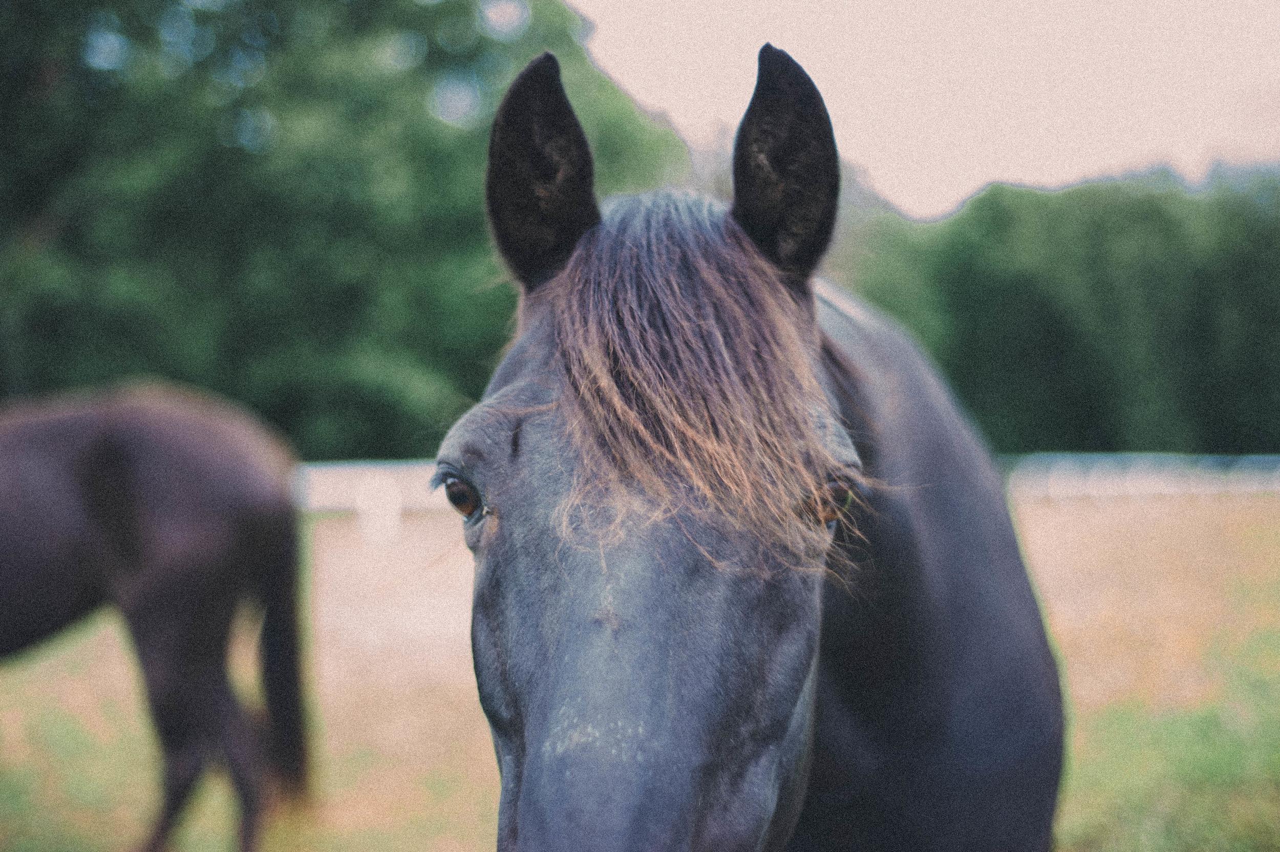 horses (3 of 8).jpg