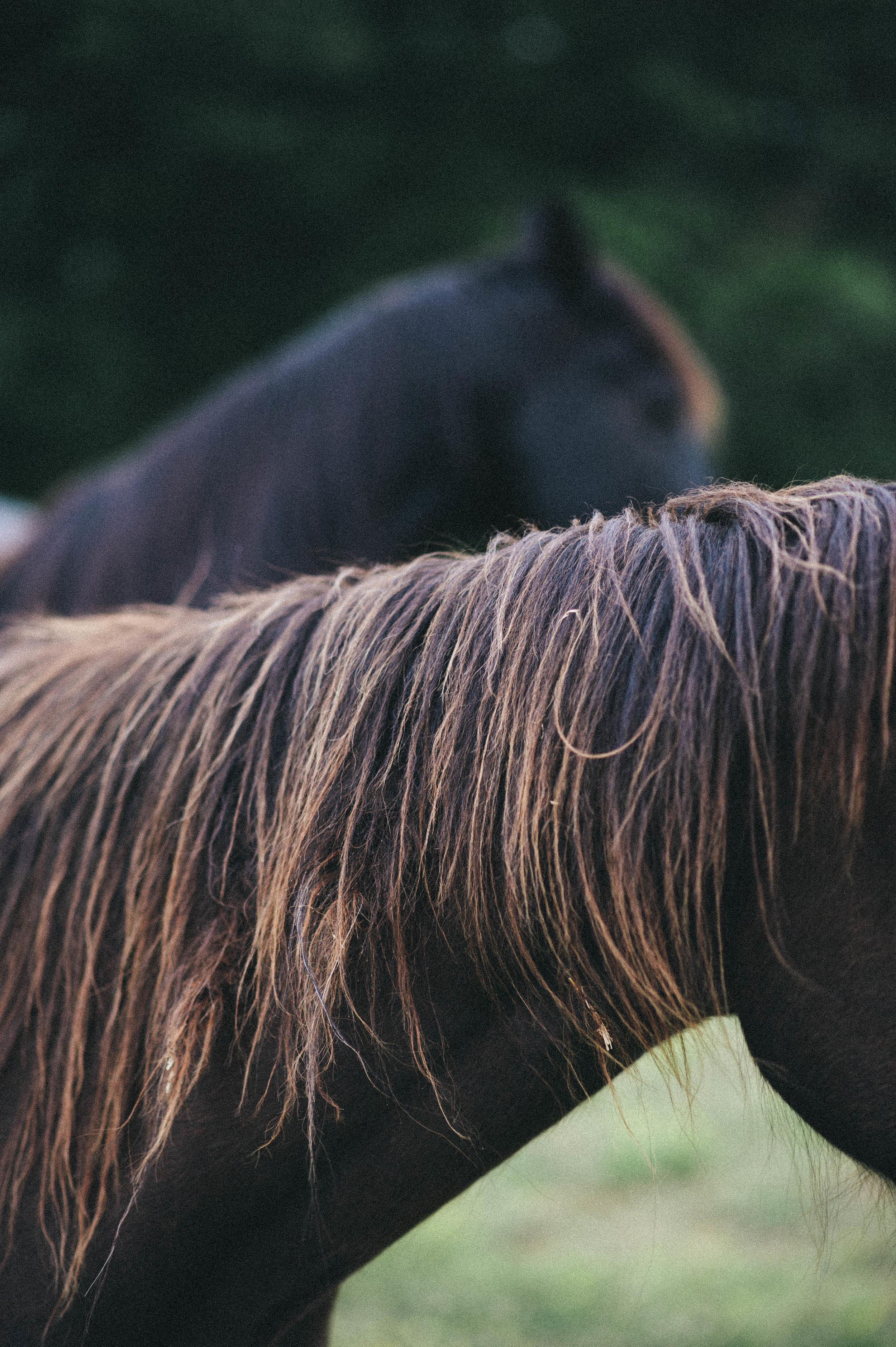 horses (7 of 7).jpg
