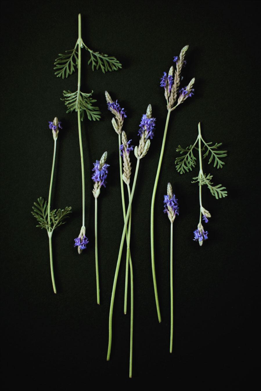 Pure-Plant-Home_aromas_lavender.jpg