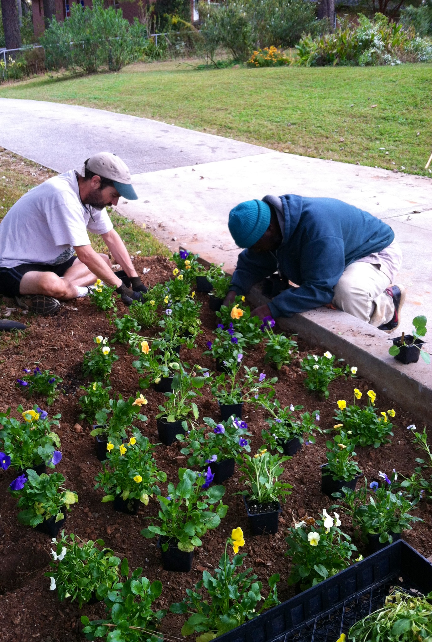 Gardeners 03, replanting, front beds october 2013.JPG
