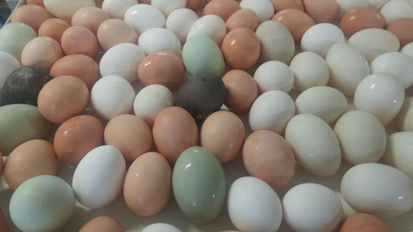 eggs washer.jpg