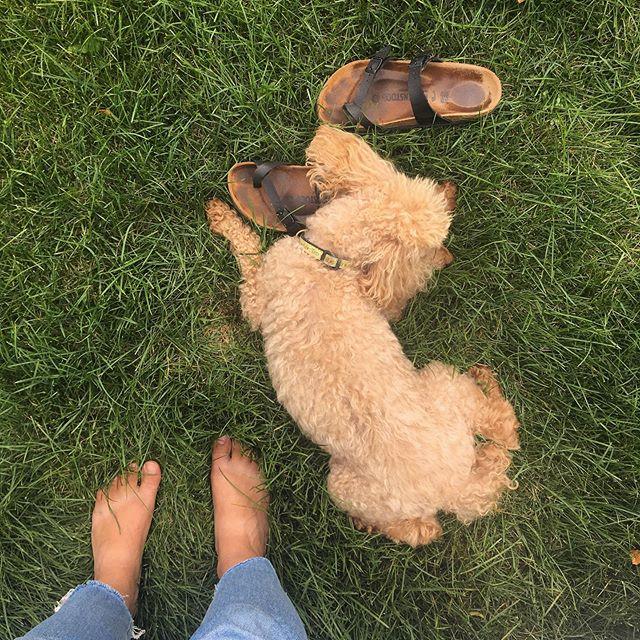 Dog days.