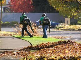 leaf-removal-indianapolis.jgp