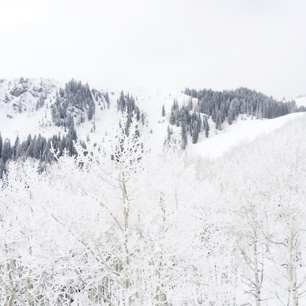 Stef_Etow_snow_nature.jpg