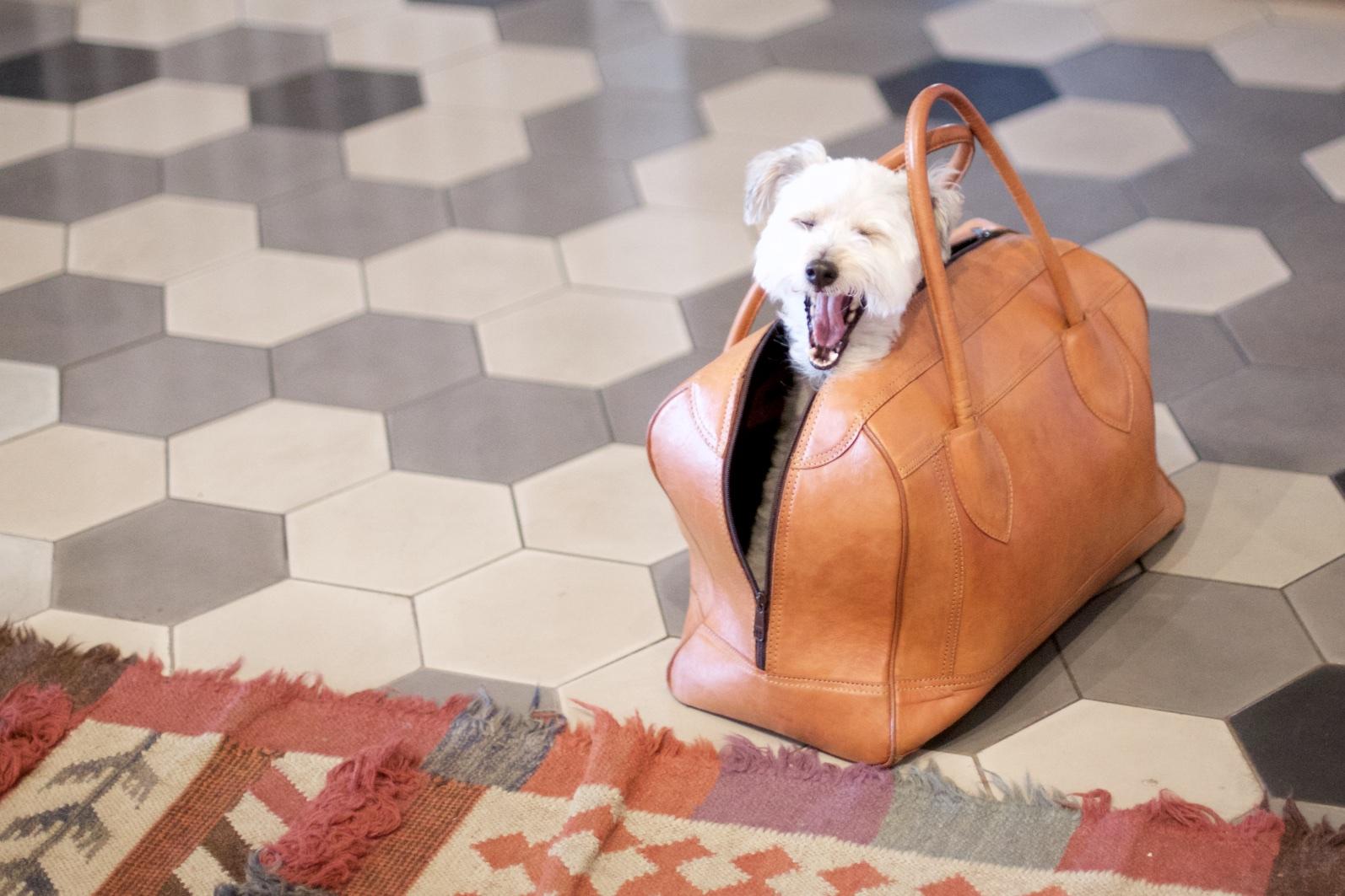 stef-etow-kimpton-dog-4.jpg