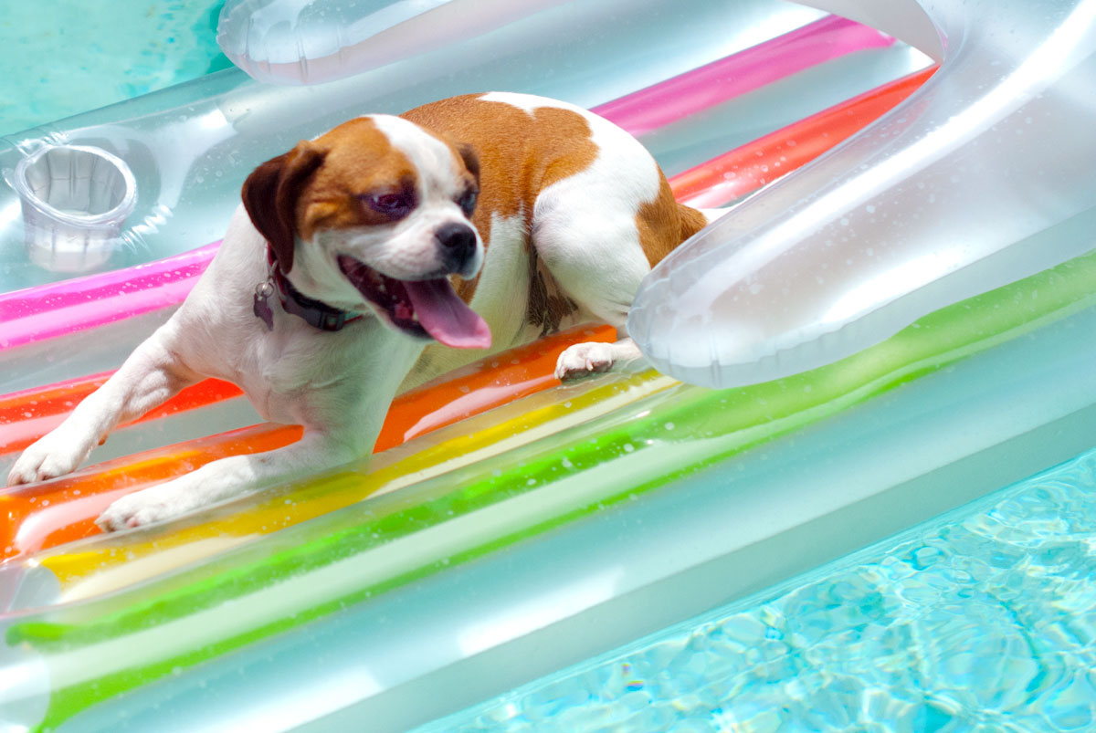 Established California | Party | Pool Party Puppy