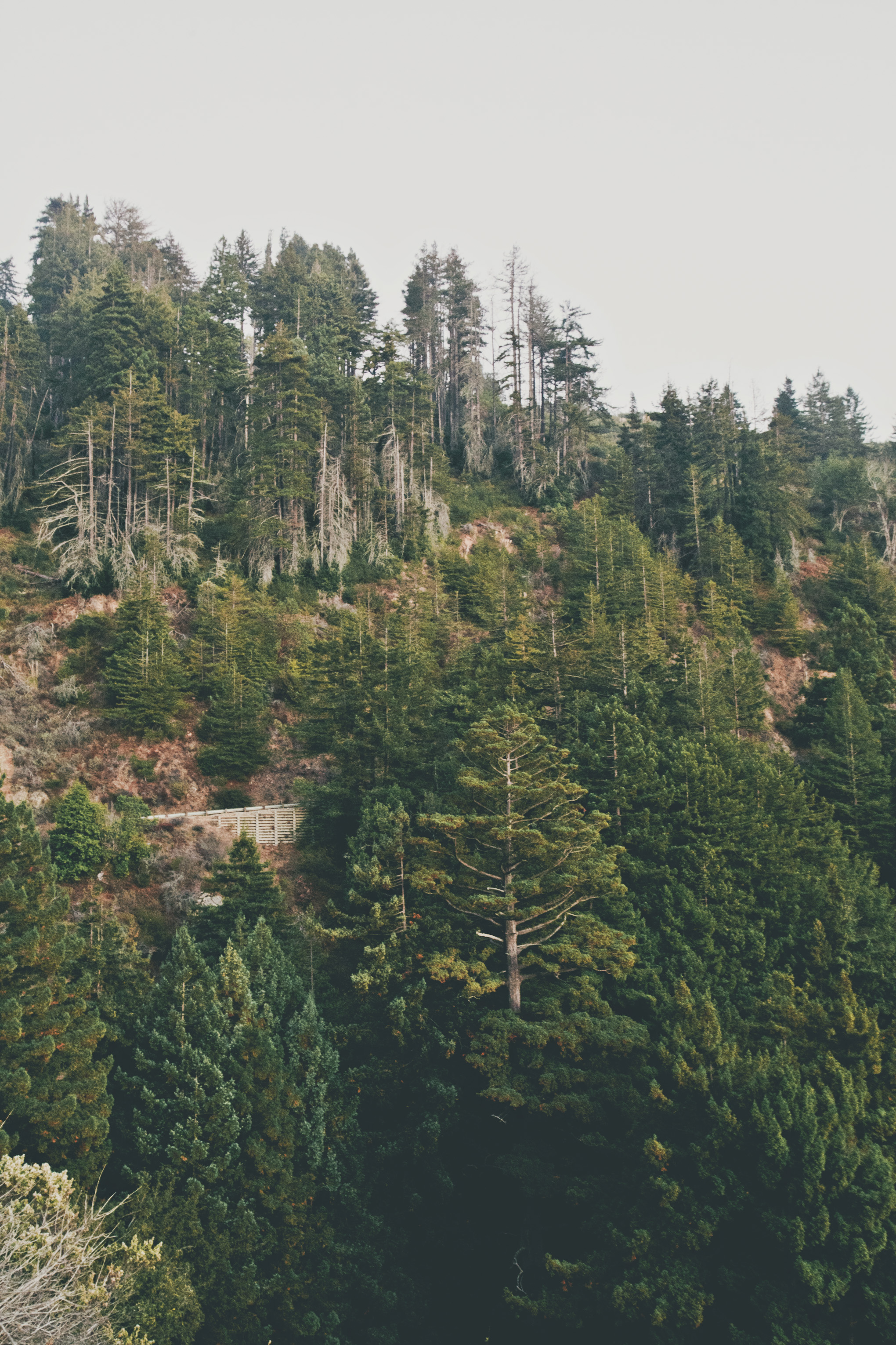 Featured on Established California - An Adventure in Big Sur, California - Redwood Trees