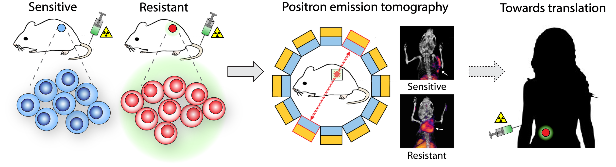Strategy for the noninvasive detection of tumour resistance to therapy using radionuclide imaging. Figure adapted from Nguyen, Q.D. & Aboagye, E.O. Integr Biol 2:483-95