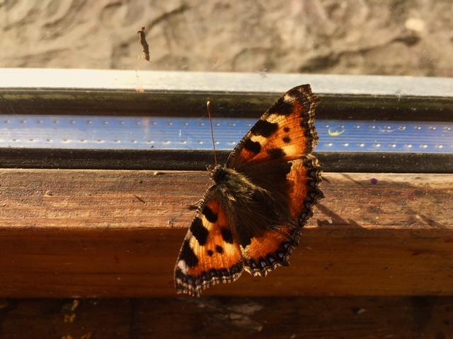 butterflyBCA.jpg
