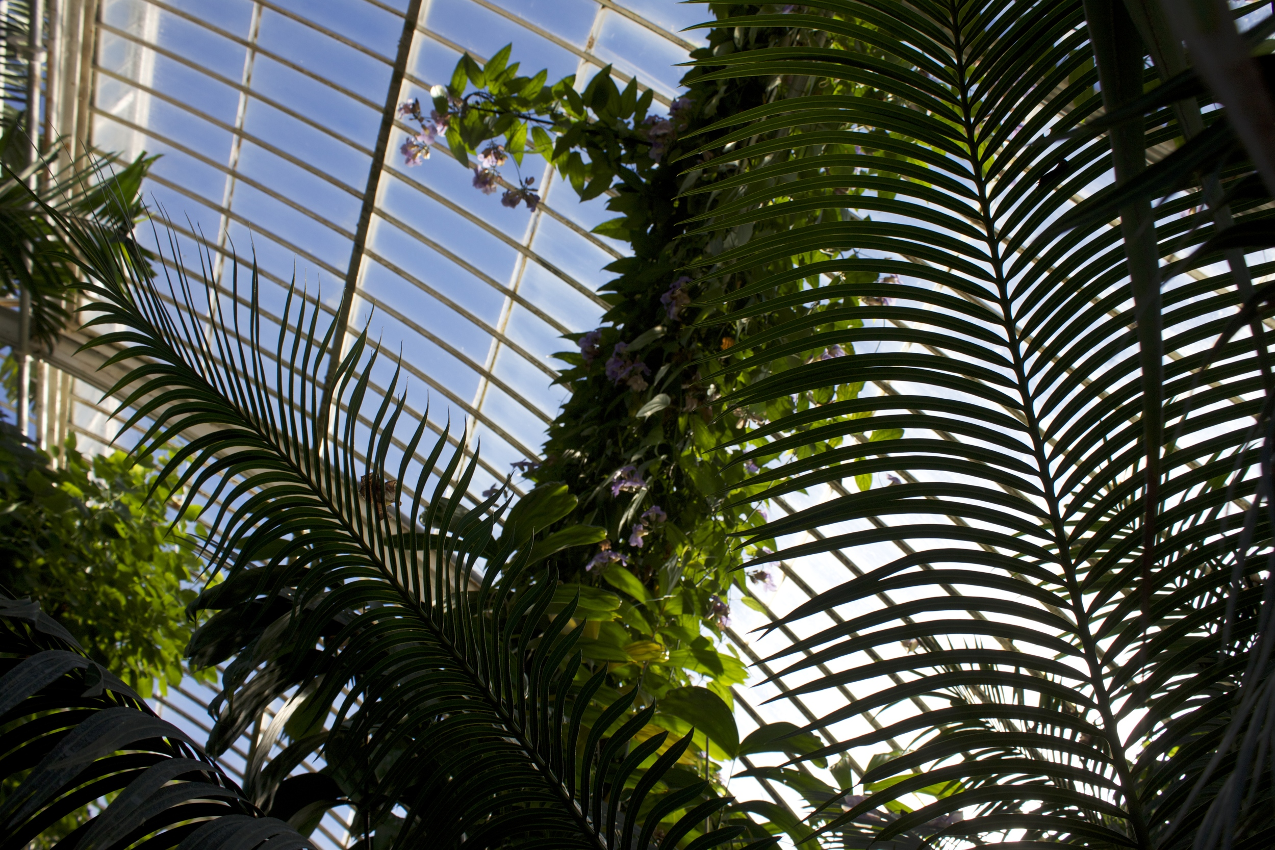 Palms and Laurifolia