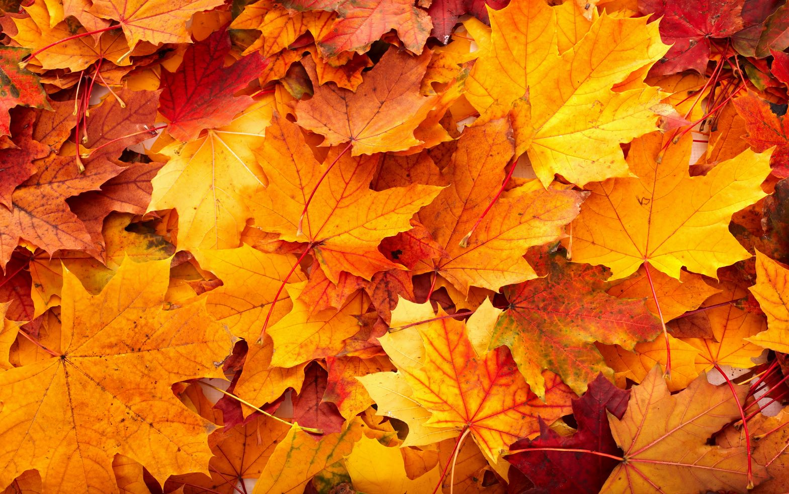 autumnleaves copy.jpg