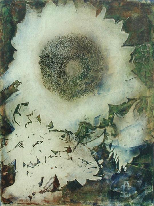 SunflowerI.jpg