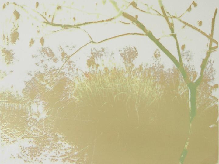 Shining Sumac and Grasses.jpg