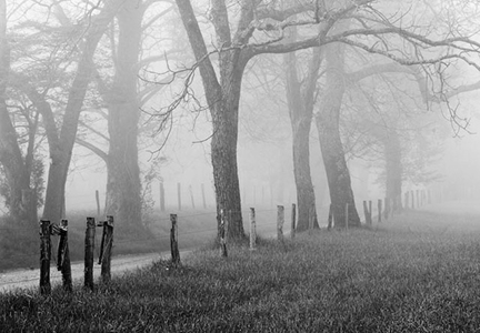 Cades Cove Road in Fog